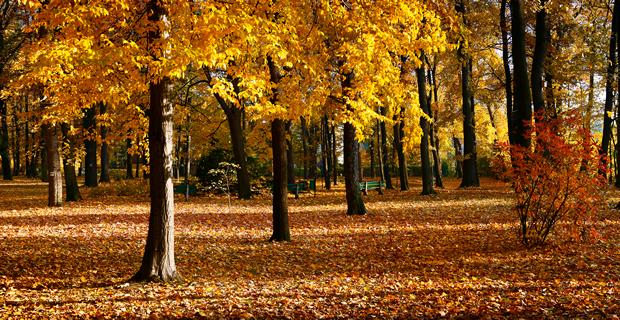 Autumn Rules